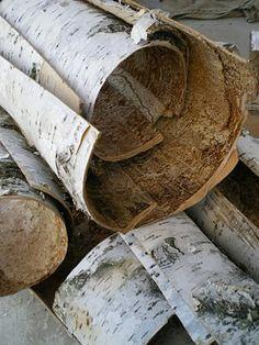 birch bark harvested (by lilfishstudios) Tree Bark Crafts, Birch Bark Crafts, Wood Crafts, Rustic Crafts, Birch Bark Baskets, Ivy House, Nature Crafts, Floor Design, Basket Weaving
