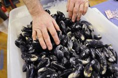 #Mussels from 5 Maine shellfish dealers recalled because of harmful algae bloom - Press Herald: Press Herald Mussels from 5 Maine shellfish…