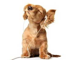Listen some music and problems fly away