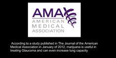 Embedded image permalink American Medical Association   #medicalmarijuana #cannabis #thc #usa #marijuana #thc #AMA #glaucoma #VOTE