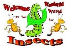 Insects are a class of living creatures within the arthropods that have a chitinous exoskeleton, a three-part body (head, tho. Movie Songs, Latest Movies, Social Networks, Insects, Fictional Characters, Places, Reading, Books, Lugares