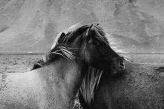 niravpatelphotography:  Friends.