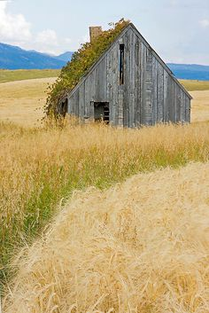 Broke Down Beauty, a.k.a. the Butt of the Barn by A.M. Ruttle