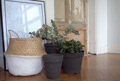 Kesän aikana kotiin kulkeutuu puutarhoilta ja kaupoista ostettavien kukkien mukana, jos jonkin kokoista ja väristä muovista istutusruukkua, joiden...