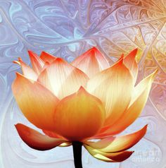 Sunshine Lotus ~art prints from $22