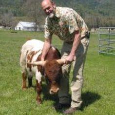 I want a mini cow!!!