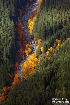 A Forest Divided - North Fork Skykomish River Valley, Washington