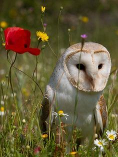 Even owls love flowers - yes, but I'll bet they like little animals more!
