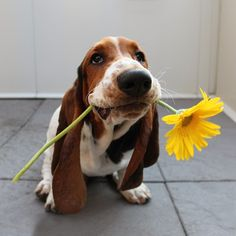 i got you a flower!