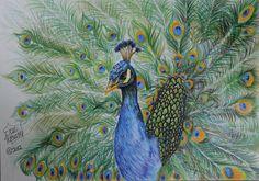 Peacock Drawings | Beautiful Peacock Drawing by Kokosasih