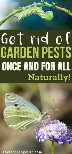 Get Rid of These Common Garden Pests Naturally! Learn how to control garden pests naturally with these DIY organic garden pest control methods and get rid of vegetable garden pests once and for all! Slugs In Garden, Garden Bugs, Garden Insects, Garden Pests, Edible Garden, Water Garden, Herb Garden, Garden Tools, Indoor Vegetable Gardening