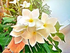 Write Flower