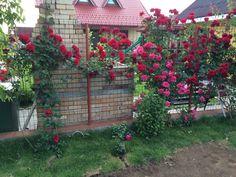 entrance in the garden.