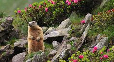 No Matter What the Groundhog Says Here are 5 Reasons to Sell Before Spring!