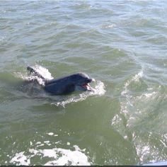 @Penelope Johnsen Dolphin 63 at Barnegat Bay, NJ