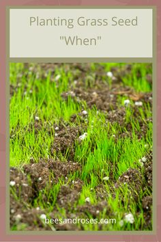 Tips and tricks to planting grass seed correctly. Stop making the same mistakes today and learn the perfect way to plant grass seed now! The ins and outs of planting grass seed. Full Sun Landscaping, Low Maintenance Landscaping, Landscaping Ideas, Fall Lawn Care, Lawn Care Tips, Planting Grass Seed, Lawn Striping, Organic Lawn Care, All About Plants