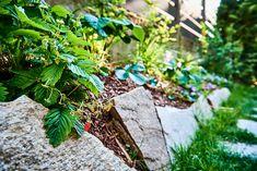 Naschmeile - die Idee für Ihren Garten. Ein Beet mit frischen Früchten, eingefasst von Steinen. Plants, Green Living Rooms, Gardening, Plant, Planting, Planets