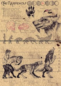 the Werewolf Ink on colored paper x Mythical Creatures Art, Mythological Creatures, Magical Creatures, Folklore, Werewolf Art, Werewolf Mythology, Werewolf Hunter, Skyrim Werewolf, Werewolf Stories