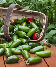 Jalapeno Hot Pepper - Bonnie Plants - 2013 Gardening