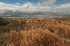 Tall grass prairie of Oklahoma, oh how I miss you!