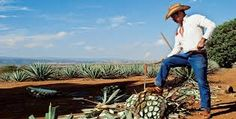 Resultado de imagen para paisajes de jalisco mexico