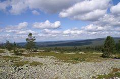 View from Kesänki Fell, tundra landscape