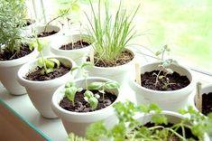Como criar em sua casa ou apartamento uma pequena horta de temperos Herb Garden In Kitchen, Kitchen Herbs, Herbs Garden, Potted Garden, Easy Garden, Kitchen Ideas, Gardening For Beginners, Gardening Tips, Culture D'herbes