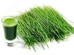 Minum Jus Rumput Gandum Berkhasiat Cegah Kanker