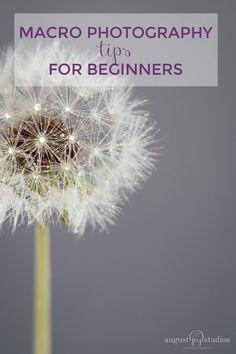 Macro-photography-tips-for-beginners #digitalphotographyforbeginners