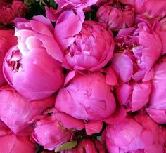 Peonies ~ from French farmers markets by janelafazio, via Flickr