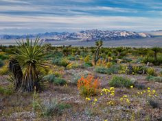 18 reasons you should NEVER go to Nevada