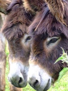Gorgeous fluffy donks!