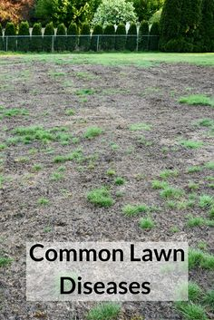 For a lawn disease to develop, there must be three factors. A susceptible plant, a favorable environment, and a pathogen. Learn more about lawn diseases here: