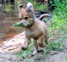 Sury the Mixed Breed-And she found a treasure!