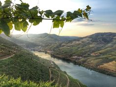 In the green valleys of the Alto Douro wine region Douro Portugal, Green Valley, River, Places, Outdoor, Landscapes, Lifestyle, Destinations, Tourism