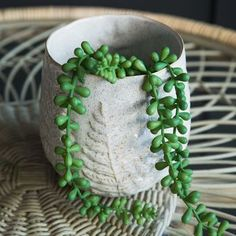 Ferns Plant Pot