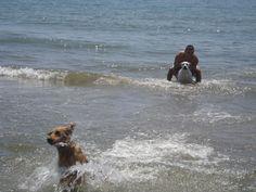 Duque, 1 año y medio, primer baño en la playa.