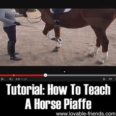 How To Teach A Horse Piaffe