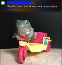 Animal Memes, Funny Animals, Cute Baby Animals, Haha Funny, Funny Memes, Frog Pictures, Frog Art, Cute Frogs, Frog And Toad