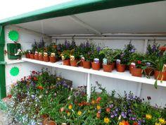 Flower stall on Guernsey  #channelislands #travel