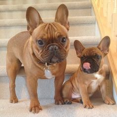 This Is Charlie and Gibson: Your New Puppy Obsession Everyone...