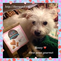 Vegan Treats for Dogs: Product Reviews http://thevword.net/2015/09/vegan-treats-for-dogs.html