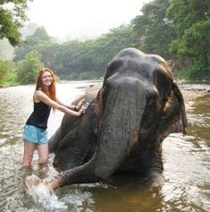 volunteer at the Thailand Elephant Sanctuary
