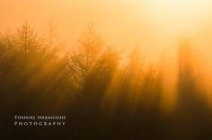 霧の朝 | Pieces of time