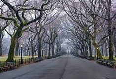 Sunday, 5:47 A.M.   (Central Park, New York) by Peter Lik