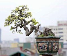 "699 Me gusta, 1 comentarios - @bonsaimente en Instagram: ""Foto de Luutruongson Bonsai. #Bonsai #BonsaiTree #盆栽 #BonsaiLife #BonsaiWorld #Бонсай #盆景 #Penjing…"""