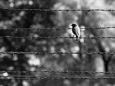 Auschwitz- this picture is so pretty for a place that had such bad things happen.