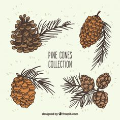 Pine cones illustration collection Free Vector