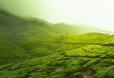 Munnar is a town in the Western Ghats mountain range in India's Kerala state. A hill station and former resort for the British Raj elite, it's surrounded by rolling hills dotted with tea plantations established in the late century. Toulouse, Le Taj Mahal, Areas Protegidas, Reserva Natural, Munnar, Green Fields, Tourist Places, Tourist Spots, Rural Area