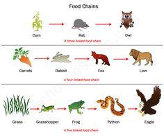 Savanna Animal Food Chain Diagram Led Tailgate Light Bar Wiring Best Simple Whenintransit Com Images Gallery